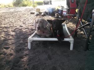 Dog Training In Shoshone, Idaho