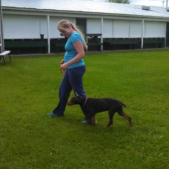 dog training doberman puppy | Proven Dog Training